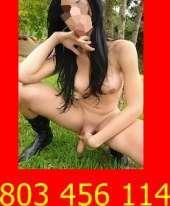 Dana travestis espertas en el sexo 803 456 114